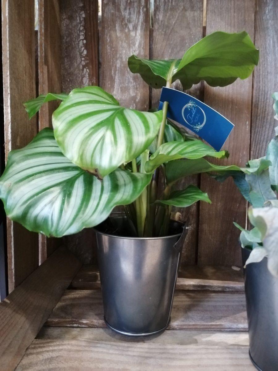 Petites plantes